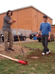Planting Shumard Oak Trees