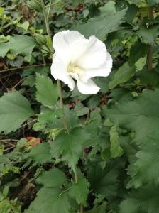 RC_flower